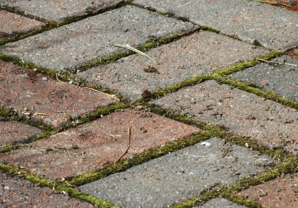 pavers_with_weeds_x1